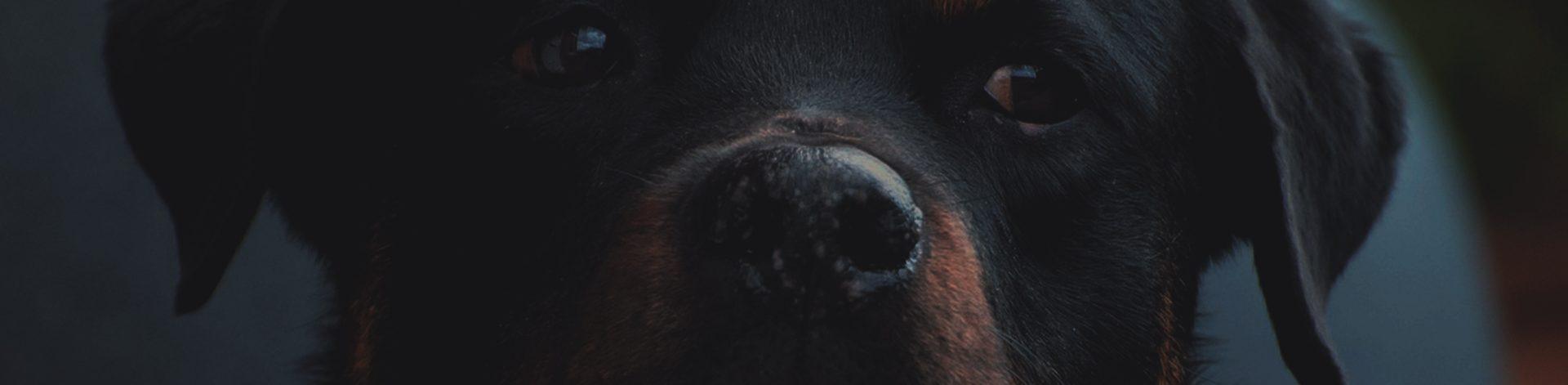 Hrvatski Rottweiler Klub